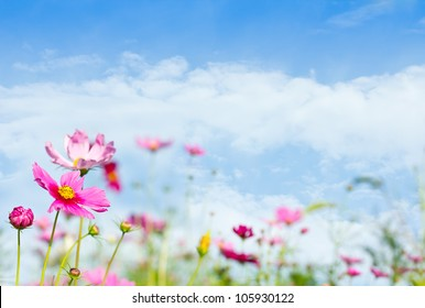 daisy flowers with beautiful  sky background