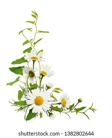 Daisy flowers and bindweed leaves in a corner floral arrangement isolated on white background. Top view. Flat lay.
