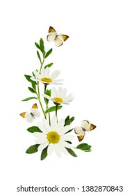 Daisy flowers and butterflies  in a corner summer arrangement isolated on white background. Flatlay. Top view.