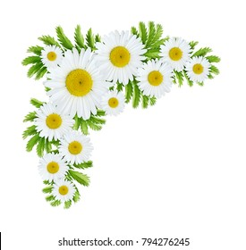 Daisy flowers corner arrangement isolated on white background. Flat lay. Top view.