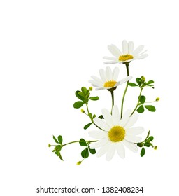 Daisy flowers  in a corner floral arrangement isolated on white background. Flatlay. Top view.