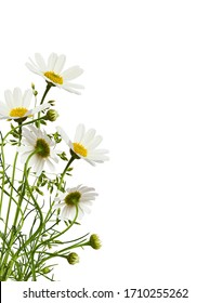 Daisy flowers and grass in a corner floral arrangement isolated on white