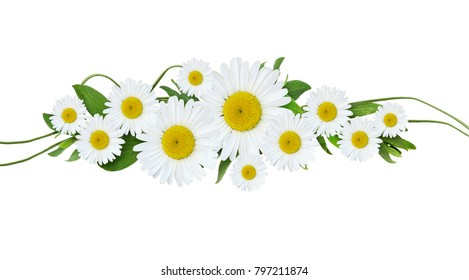 Daisy flowers and green grass line arrangement isolated on white. Flat lay. Top view.