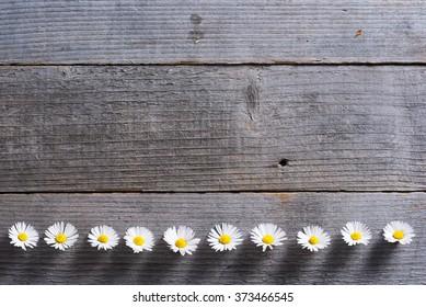 daisy flowers on weathered wood background