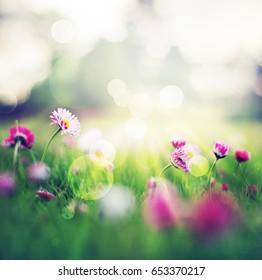 Daisy in grass lit by sunlight