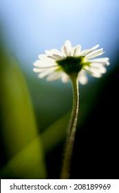 Daisy in the spotlight