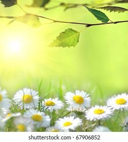 Daisy and the sun behind
