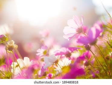 Daisy under sunlight