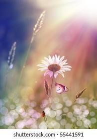 daisy under the sunlight