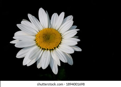 daisy wild flowers of various colors