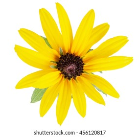 Daisy yellow flower isolated on a white background with clipping path