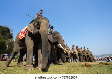 Dak Lak , Vietnam - March 12, 2017 : Elephants stand in line before the race at racing festival by Lak lake in Dak Lak, center highland of Vietnam