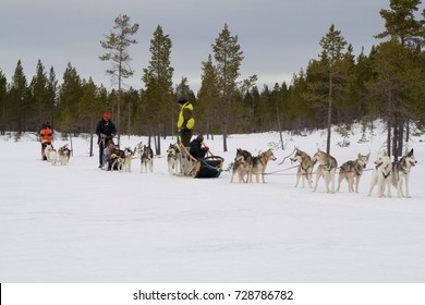 DALARNA, SWEDEN- MARCH 14, 2007 - Dog sledding with huskies in Drevdalen, Dalarna, Sweden.