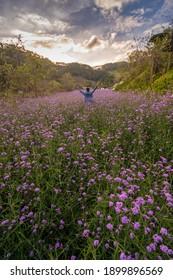 Dalat city, Vietnam - January 14th 2020: Purple flower fields and tourists  at Dalat city, Vietnam