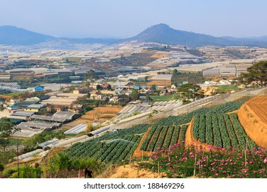 Dalat vegetable farms