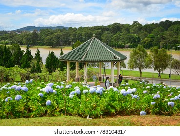 Dalat, Vietnam - Nov 25, 2017. Hydrangea flowers blooming at the park in Dalat, Vietnam. Da Lat is located on the Langbian Plateau, in the southern parts of the Central Highlands.