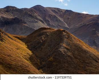 Dall Sheep on Hill in Autumn, Denali National Park, Alaska