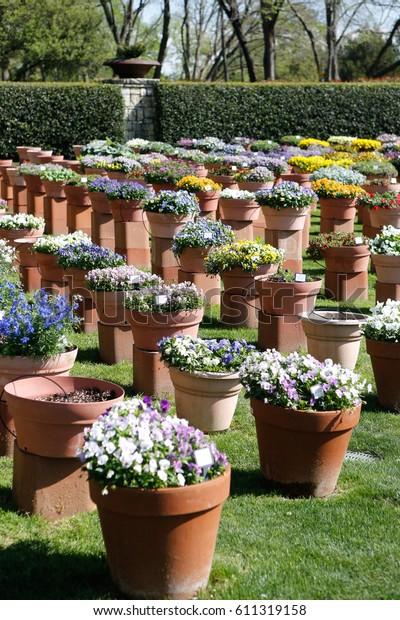 Dallas Arboretum Botanical Garden Botanical Garden Stock Photo