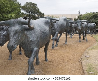 Dallas, TX USA/June 29, 2014: Herd of longhorn cattle walking down a trail, as part of a landmark, 73-piece bronze cattle drive sculpture in Pioneer Plaza, donated to Dallas by the Trammel Crow Co