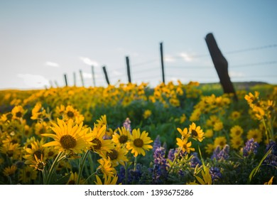Dalles Mountain Ranch Flowers in summer
