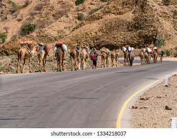 Dallol/Ethiopia- 02/02/2019:Caravan of camels walk on the road