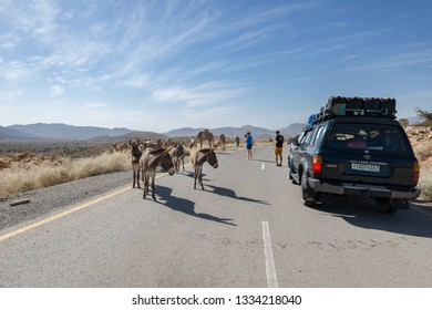 Dallol/Ethiopia-02/03/2019: Donkeys and cars on the road
