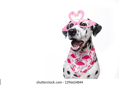 Shocked Face Dog Images Stock Photos Vectors Shutterstock