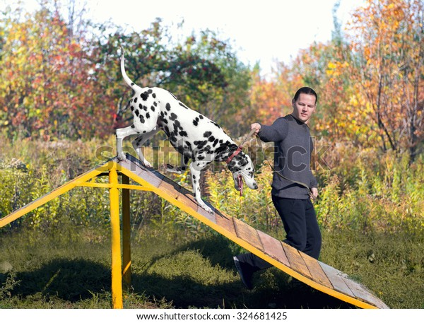 Dalmatian dog with man handler  in nature on the training ground is jumping through a barrier in the form of slides - small DoF focus put only to pier