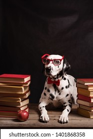 Dalmatian dog with reading glasses and red bow, sitting down between piles of books, on black background. Intelligent Dog professor among stack of books.Copy Space