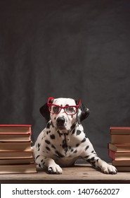 Dalmatian dog with reading glasses sitting down between piles of books, on black background. Intelligent Dog professor among stack of books is studying. Education, the student. Copy Space