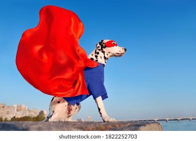 Dalmatian dog wearing superhero costume with a flying cloak