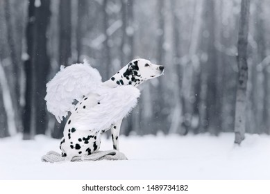 Dalmatian dog with wings sitting in the winter forest