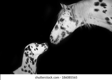 Dalmatian and Horse