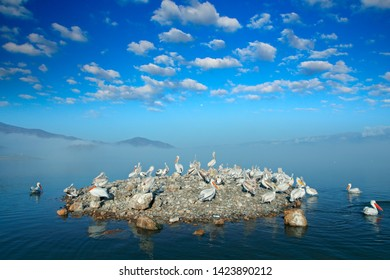 Dalmatian pelican island with fog, Pelecanus crispus, landing in Lake Kerkini, Greece. Pelican with open wings. Wildlife scene from European nature. Bird landing to the blue lake wate, white clouds.