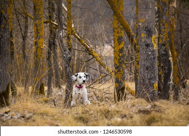 Dalmatian puppy and wild nature