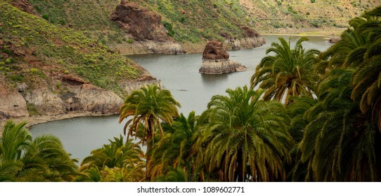 Dam and palm forest, La sorrueda, Gran canaria, Canary islands