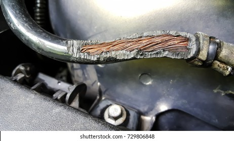 Damage on rubber of electricity wire in the car from rat bite