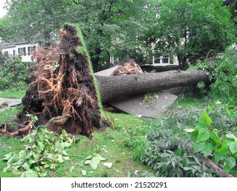Damage to a tree and sidewalk created by a severe storm.