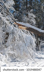 A lot of damage to trees and power lines caused by a blizzard