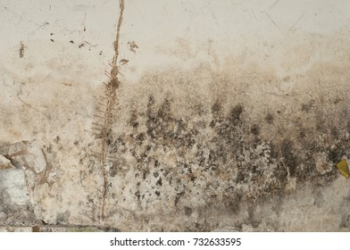 Damaged and broken gypsum wall with mold and black fungus on its surface because of moisture