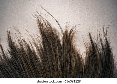 damaged brown female hair.