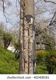 Damaged concrete pole with exposed steel reinforcement resistance bars