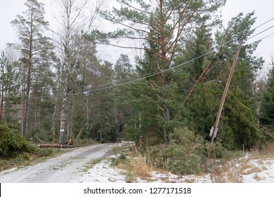 Damaged electric pole and fallen pine trees after the terrible storm Alfrida in Sweden in Roslagen in the east part of Sweden
