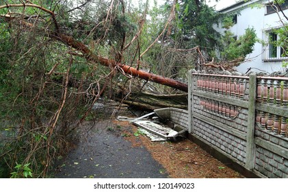 Damaged fallen tree on a rural road after a strong storm