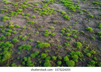 damaged lawn at a soccer field
