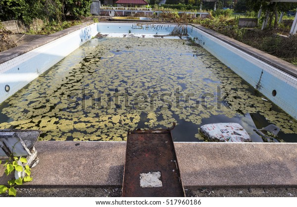 Damaged Old Swimming Pool Dirty Water Stock Photo (Edit Now) 517960186