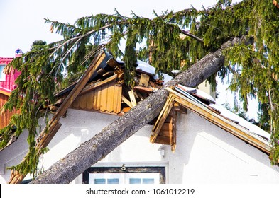 Damaged roof of the house, a tree that fell on the house due to storm.