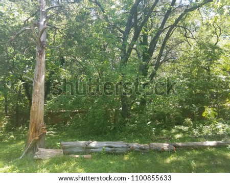 damaged tree on the ground and green plants