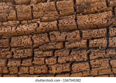 damaged wood texture eaten by bark beetle, borer
