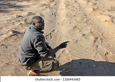 DAMARALAND, NAMIBIA - September 6, 2015: Damaraland Camp guide and tracker finds elephant tracks in the sand that will lead the tourists to the herd of desert adapted elephants they are looking for.
